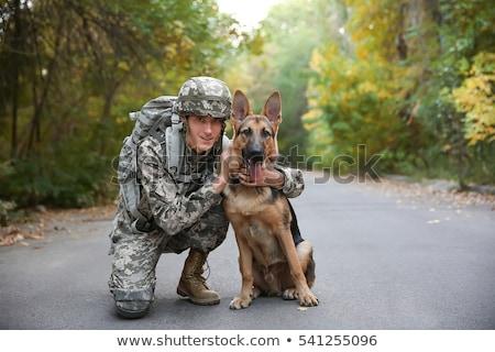 Köpek askeri asker stüdyo Stok fotoğraf © Quasarphoto
