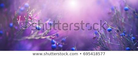 forest blueberries stock photo © -baks-