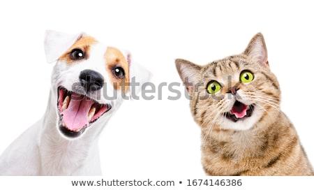 ребенка · сиамские · кошки · белый · улыбка · любви · глазах - Сток-фото © lithian