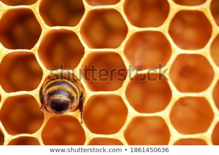 Honeycomb cells close-up with honey Stock photo © jordanrusev
