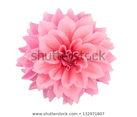 Stock photo: Macro shot of pink flower