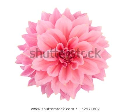 rosa · jardim · macro · tiro · água · primavera - foto stock © stevanovicigor