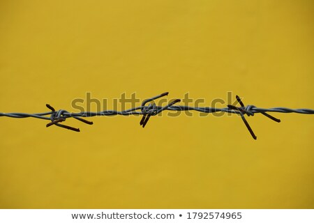 Freedom concept: barbed wire closeup vintage blur background Stock photo © cienpies