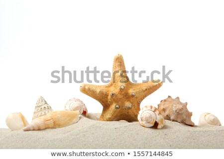 tropikal · plaj · denizyıldızı · egzotik · su · doğa · deniz - stok fotoğraf © Kacpura