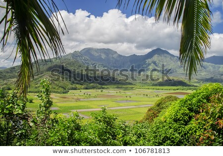 vallei · Hawaii · USA · zomer · reizen · eiland - stockfoto © backyardproductions