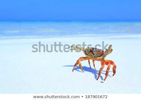A beach with a crab Stock photo © bluering