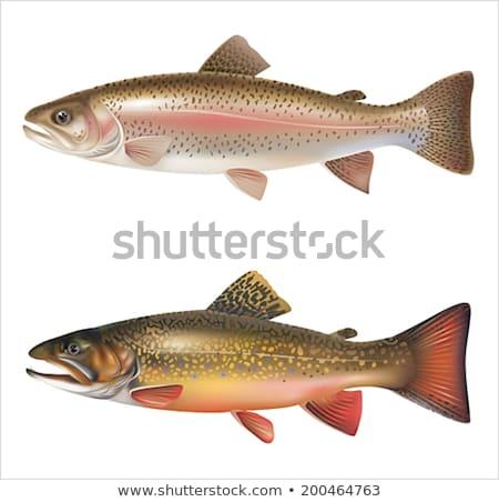 Szary pstrąg ryb ilustracja biały żywności Zdjęcia stock © bluering