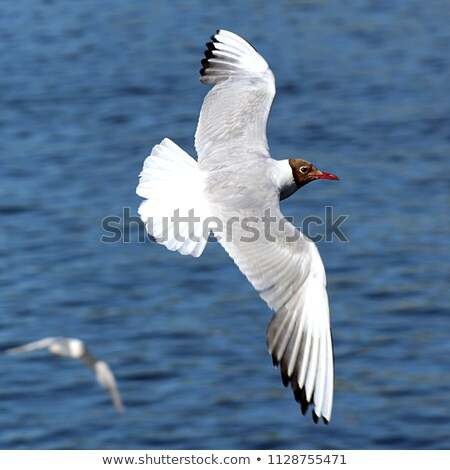 seagull shown up close stock photo © marekusz