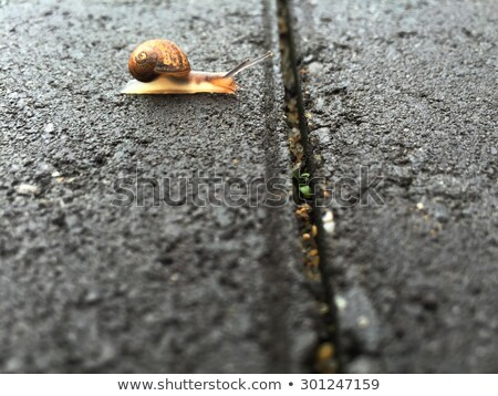 snail from crossing an obstacle Stock photo © pixinoo