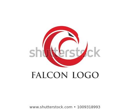 Falcon aquila uccello logo modello vettore Foto d'archivio © Ggs