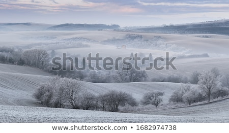 Frosted arable land Stock photo © stevanovicigor