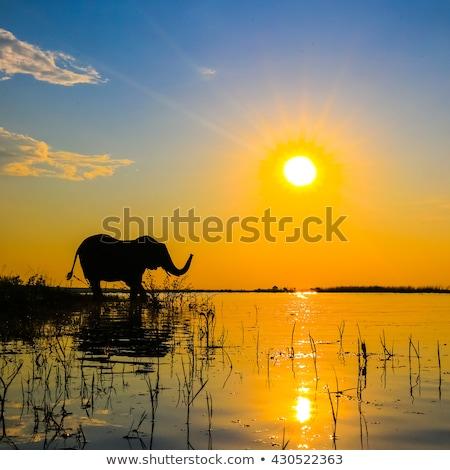 Elefánt park Dél-Afrika természet háttér utazás Stock fotó © simoneeman
