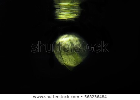 Green fresh brussel sprout in water with mirror reflection Stock photo © deandrobot