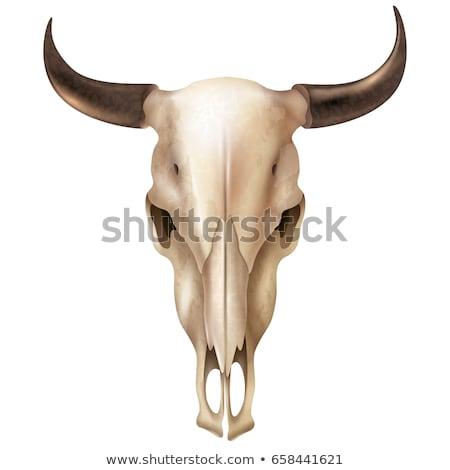 Crâne vache tête squelette Bull mort Photo stock © popaukropa