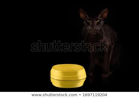Black and white cat. Sweetheart Kitten home pet Stock photo © popaukropa