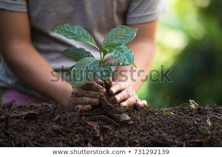 Plant boom natuurlijke koffie zaailingen natuur Stockfoto © artrachen