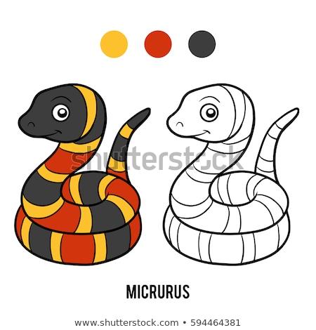 Micrurus red snake cartoon vector illustration on white. Stock photo © yopixart
