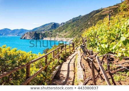ösvény Olaszország mediterrán part út természet Stock fotó © Hofmeester