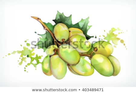 Watercolor illustration of bunches of grapes Stock photo © Sonya_illustrations