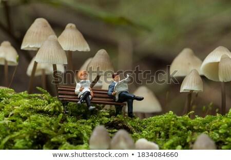 ブラウン · ツリー · 菌 · 写真 · 美しい · 食品 - ストックフォト © compuinfoto