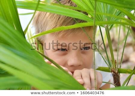 子供 隠蔽 後ろ ツリー 花 森林 ストックフォト © IS2