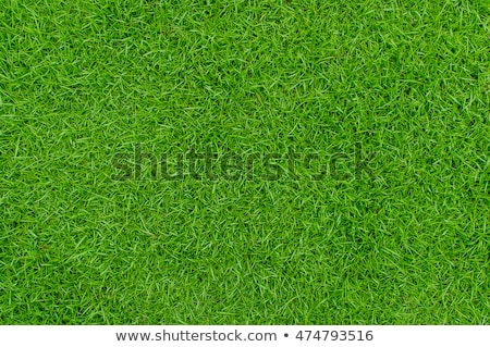 a soccer football on a fresh green background stock photo © rufous