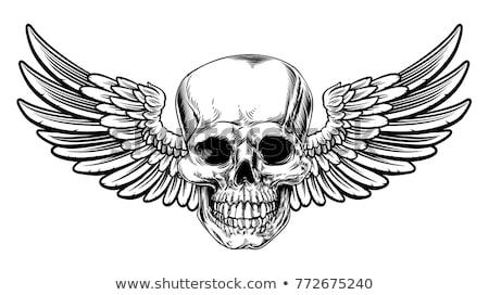 Winged Skull Vintage Woodcut Etched Style Stock photo © Krisdog