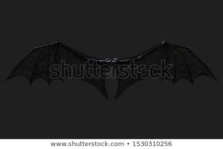 набор · дракон · Bat · крыльями · Cartoon · стиль - Сток-фото © krisdog