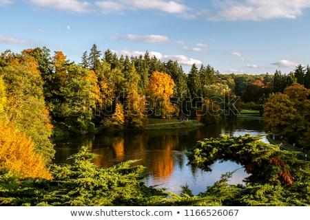ősz · part · sötét · ágak · tájkép · eső - stock fotó © Mps197