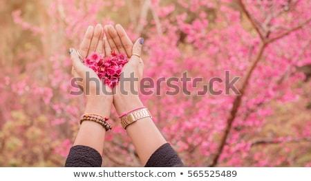 ág · sakura · cseresznye · virágzó · virágok · vektor - stock fotó © blackmoon979