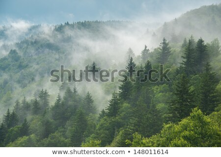 coniferous forest on a ridge stock photo © mps197