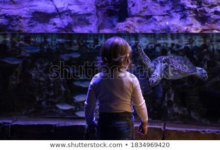 teknős · Vörös-tenger · hal · tájkép · tenger · háttér - stock fotó © is2