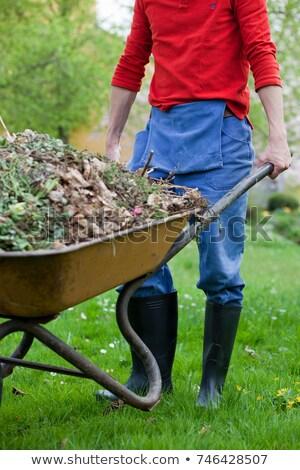 Man pushing a wheelbarrow in the garden Stock photo © wavebreak_media