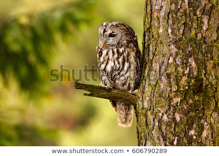 eagle · owl · séance · neige · relevant · yeux · plumes - photo stock © fotoyou
