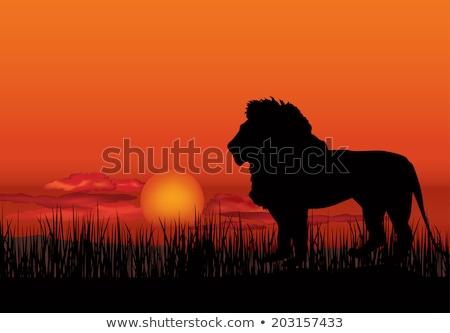 ライオン · シルエット · 日没 · ツリー - ストックフォト © terriana