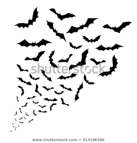 Bat isolated. Night animals vampire. Vector illustration Stock photo © popaukropa