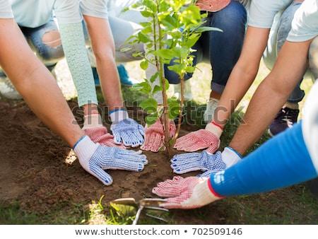 Grupo voluntarios manos árbol parque Foto stock © dolgachov