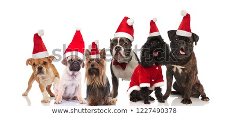 large team of six adorable santa dogs sitting and standing Stock photo © feedough