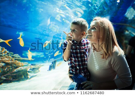 Familie Meer Aquarium Illustration Wasser Design Stock foto © colematt