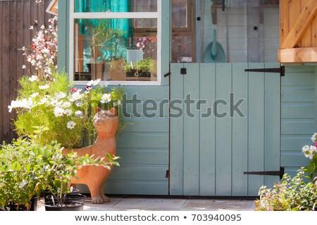 Jardinero flores invernadero atractivo cute mujer Foto stock © deandrobot