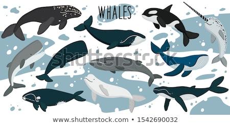 Vektör ayarlamak balina gülümseme deniz okyanus Stok fotoğraf © olllikeballoon