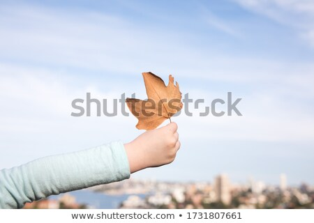 kids with autumn maple leaves over sky background Stock photo © dolgachov