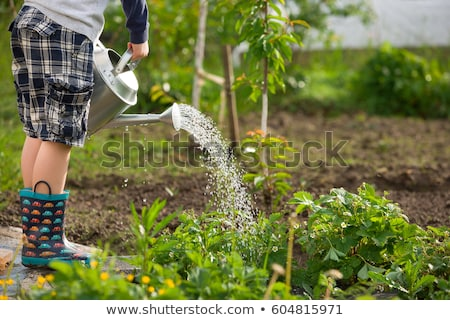 cute little toddler boy watering plants with watering can in the garden adorable little child helpi stock photo © galitskaya