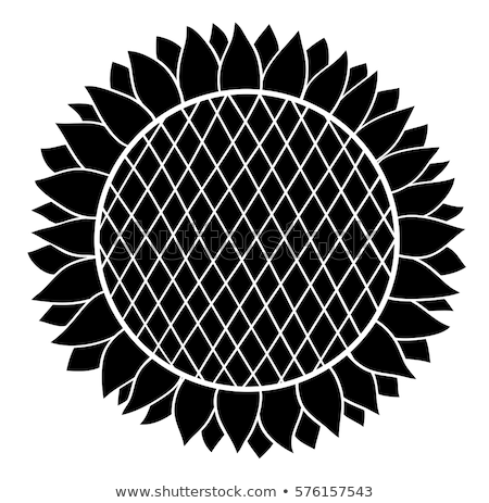 vector sunflower seed head flower Stock photo © VetraKori