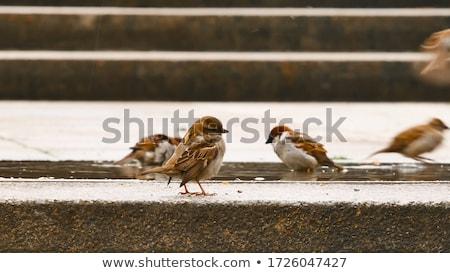 スズメ 自然 テンプレート 実例 葉 背景 ストックフォト © bluering