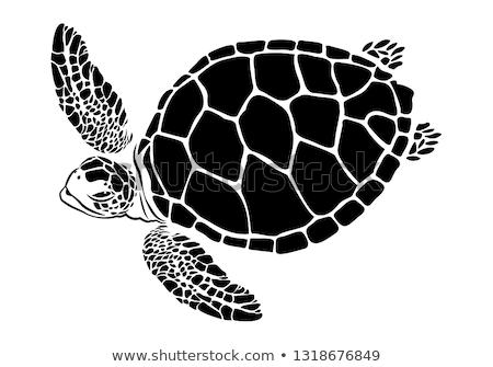 teknős · sziluett · forma · vadállat · fekete · ikon - stock fotó © robuart