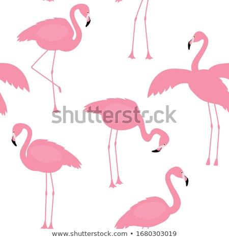 Czerwonak egzotyczny ptaków charakter różowy Zdjęcia stock © robuart