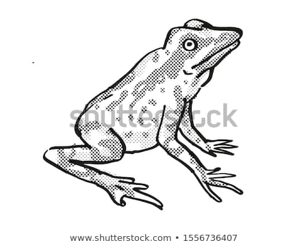 Andersson's Stubfoot Toad Endangered Wildlife Cartoon Drawing Stock photo © patrimonio