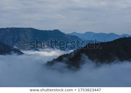 Bos bomen rokerig hemel Stockfoto © wavebreak_media