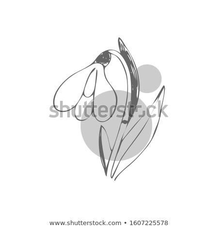 изолированный серый вектора Cartoon Сток-фото © Lady-Luck